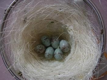 birds1 011 (640x480).jpg